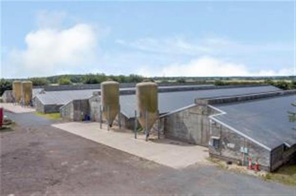 Animal Factory Farm