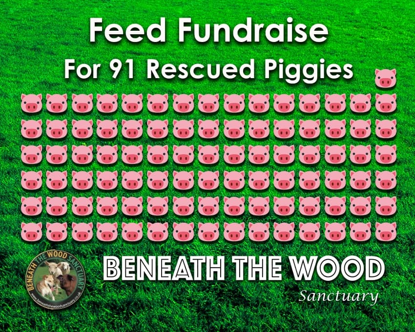 Feed 91 Pigs